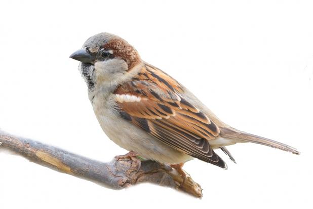 Un esperto vi farà conoscere il mondo degli uccellini e come curarli
